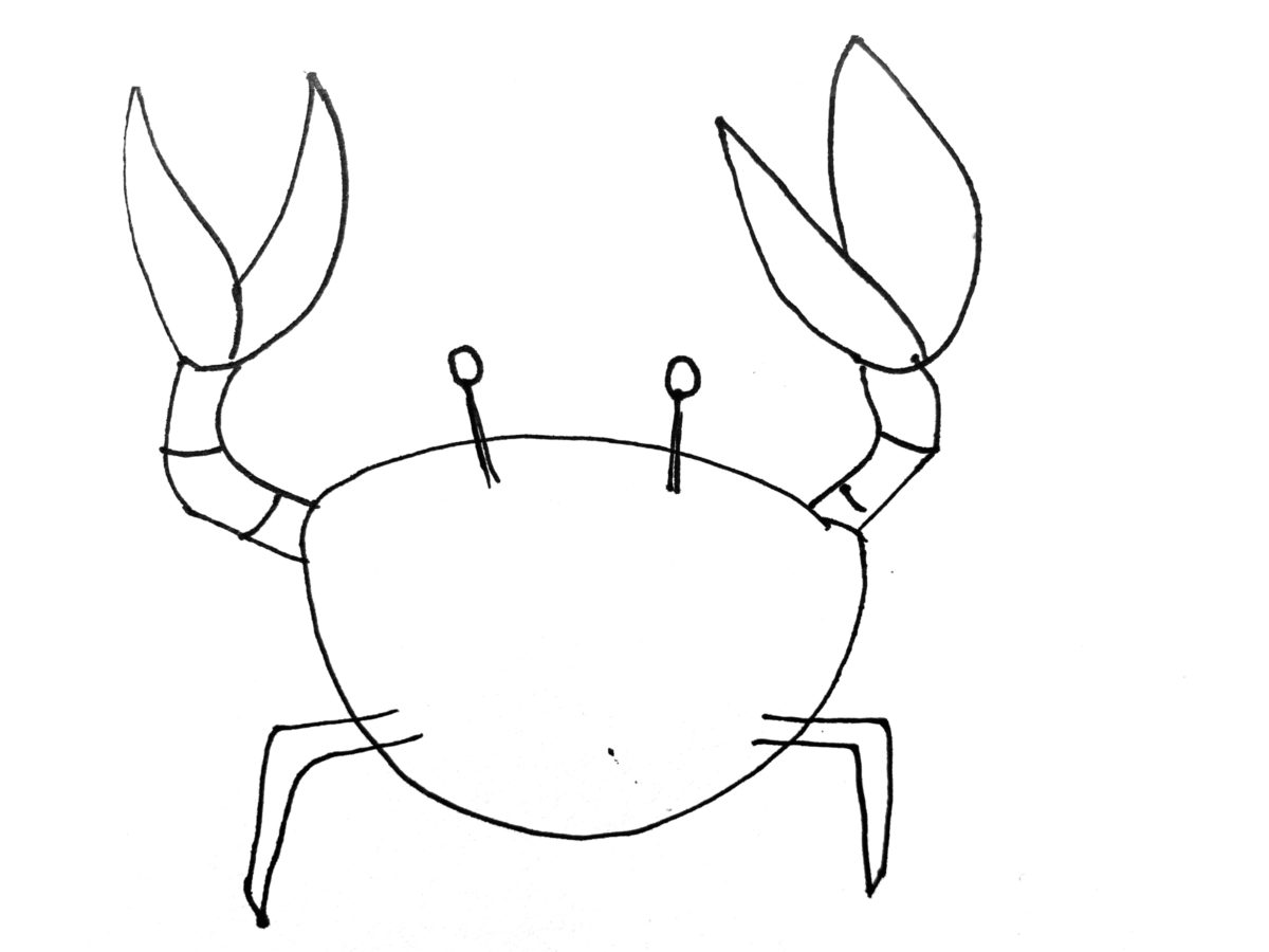 Detail view of drawing a crab activity.